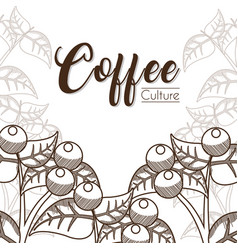 Coffee culture beans vector