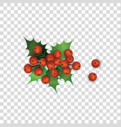 holly berries and leaves christmas plant cartoon vector image