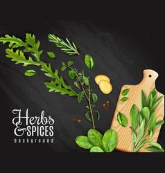 realistic herbs chalkboard vector image