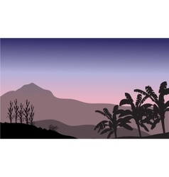 Banana tree in hill scenery vector image
