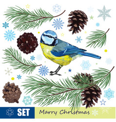 christmas set titmouse pine branch with cones vector image