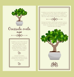greeting card with crassula ovata plant vector image