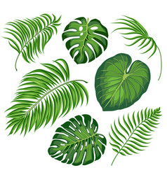 Leaves tropical plants vector
