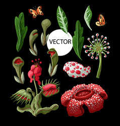plant predators such as venus flycatcher sundew vector image