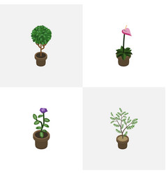 Isometric plant set of grower tree fern and vector