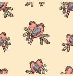 background of bullfinches on spruce branches vector image