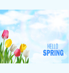 tulips flowers beautiful spring vector image