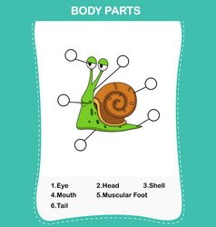 snail vocabulary part of body vector image