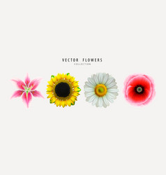 flowers buds set isolated on white vector image