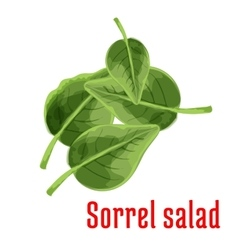 Fresh sorrel salad vegetable green leaves icon vector image