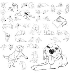 Drawing set of adorable beagle dog vector image vector image