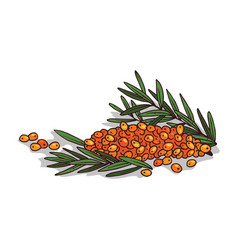 Isolated clipart sea buckthorn vector