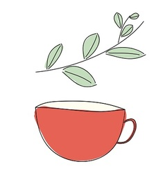 Herbal drink vector image vector image