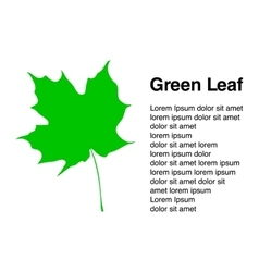 with leaf card background vector image vector image