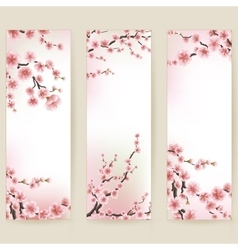 Cherry blossom realistic banner EPS 10 vector image vector image