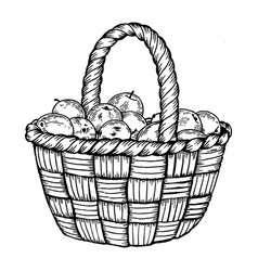 Basket with apples engraving vector