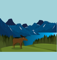 canadian landscape with moose scene vector image