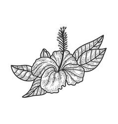 Hibiscus flower sketch vector