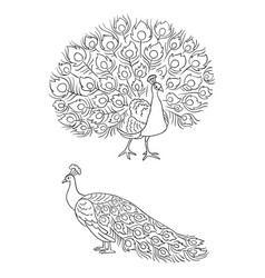 peacock in outlines vector image vector image