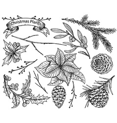 Set of hand drawn winter plants vector