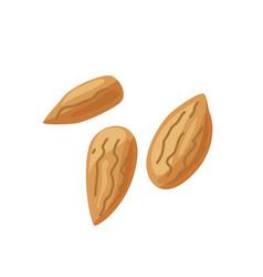 Three almond nuts in bright color cartoon flat vector