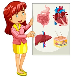 Woman presenting chart of organs vector image vector image