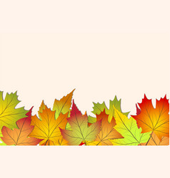 beautiful colourful autumn leaves back to school vector image