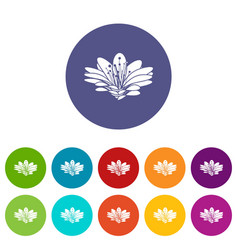 flower icons set color vector image