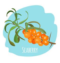 hippophae sea buckthorn seaberry sandthorn vector image