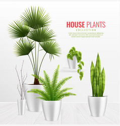 house plants in pot composition realistic concept vector image