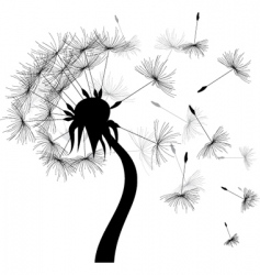 windy dandelion vector image