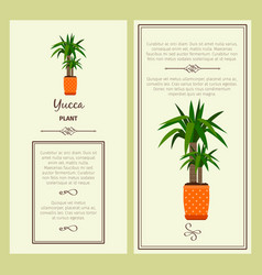 Greeting card with yucca plant vector
