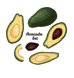 hand drawn engraved colorful avocado set isolated vector image