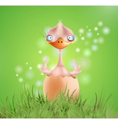baby chick vector image vector image