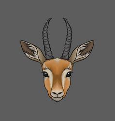head of antelope portrait of wild animal hand vector image