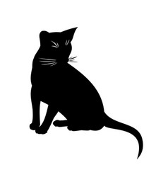 Abyssinian cat isolated black vector