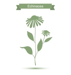 Echinacea plant with flowers silhouette vector