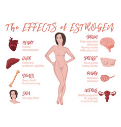 Estrogen effects infographic vector