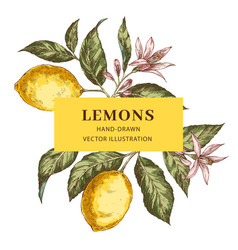 lemon hand drawn frame layout vector image