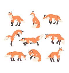 Red fox activity set wild predator forest mammal vector