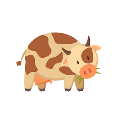 spotted cow chewing grass farm or ranch animal vector image