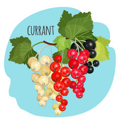 currant with green leaves of white black and red vector image vector image