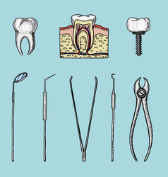 instruments equipment of the dentist for teeth vector image