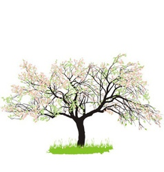 Apple tree in spring vector image vector image