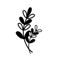contour branches with leaves natural plant design vector image