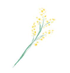 Cute spring watercolor flower mimosa art vector