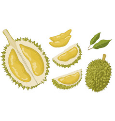 Durian set isolated items vector