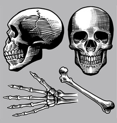 hand drawn human skull set vector image