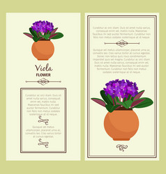 greeting card with viola plant vector image