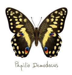 Butterfly Papilio Demodocus Watercolor imitation vector image